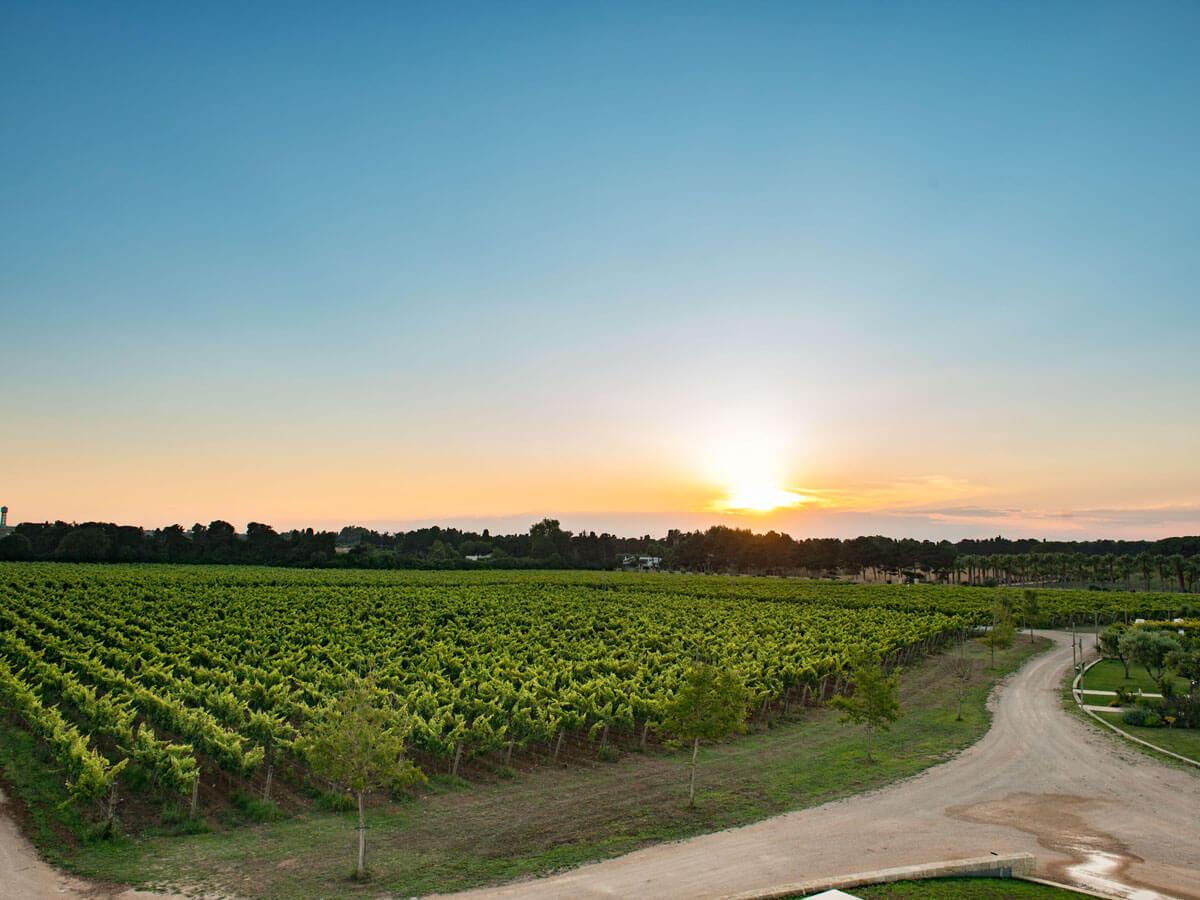 Tenuta Corallo, the wine resort that tells the story of Otranto
