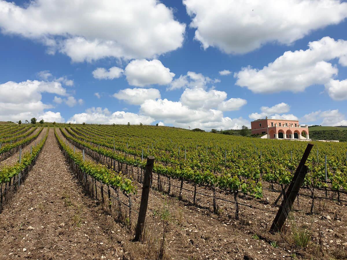 Tenuta Parco dei Monaci, a wine treasure in the City of Stones